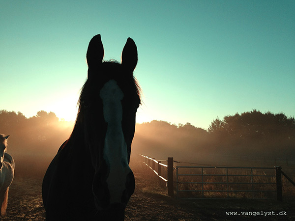 Misty morning iphone horse