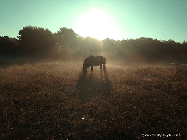 Foggy morning horse iphone