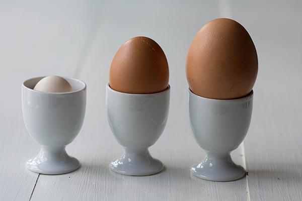 Æg - dværghøns og røde amerikanere