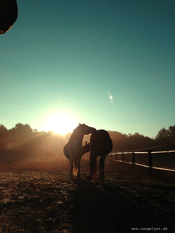 Morning cuttle horse iphone shot