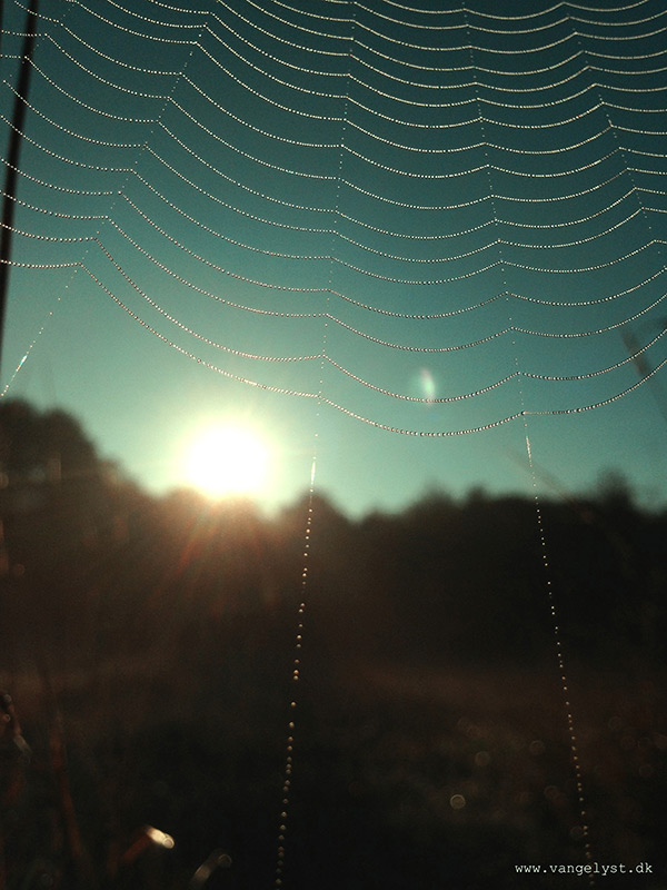 Morning dew spider web by vangelyst