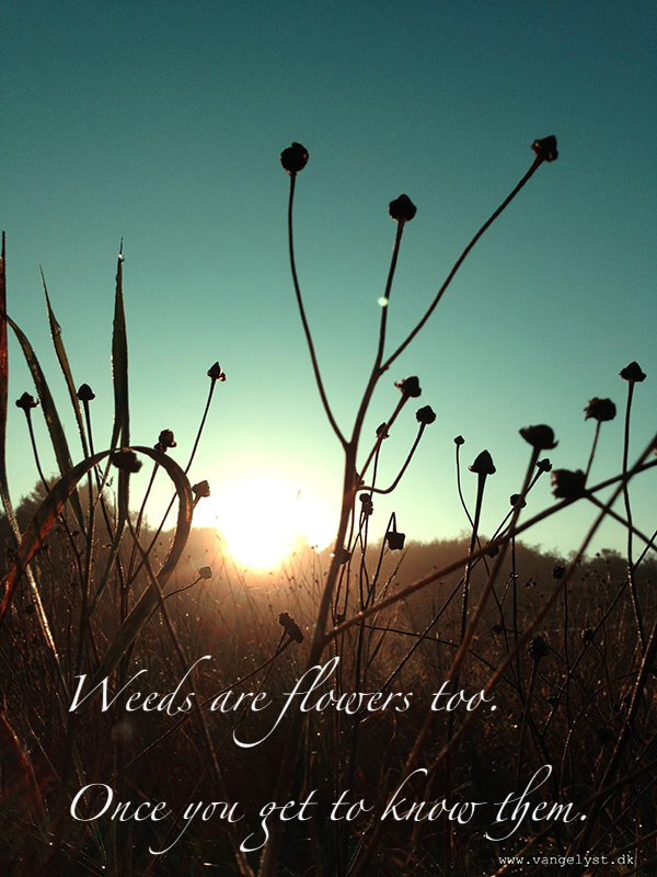 weeds are flowers too morning quote vangelyst