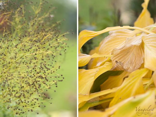 efterår collage gule blade blomster