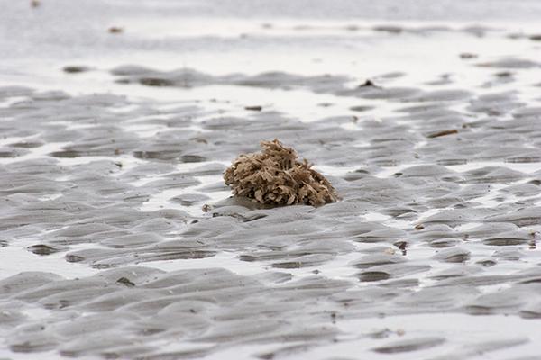 Fanø strand tang