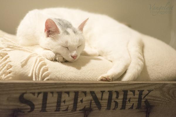 Kat sover i trækasse