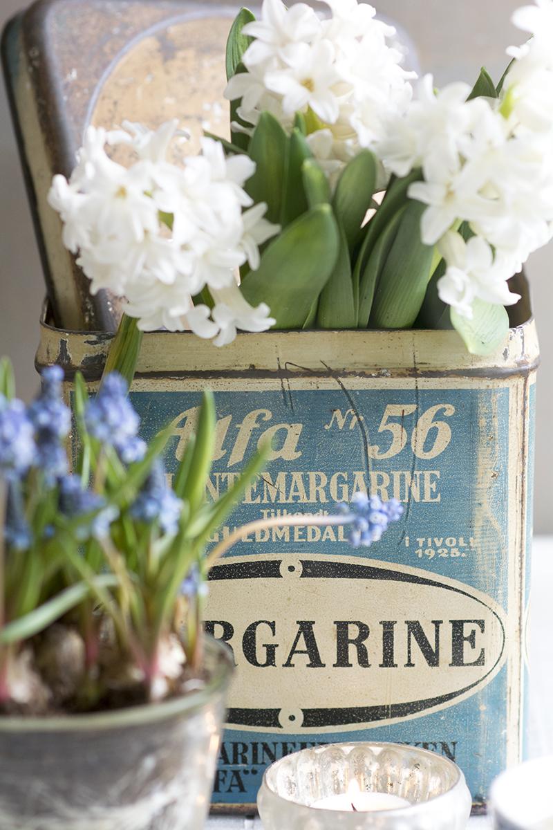 hyacinter forår - www.vangelyst.dk