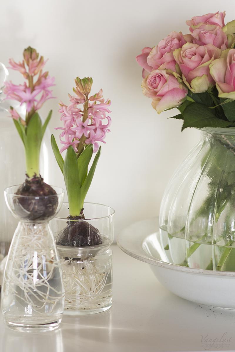 hyacinter roser www.vangelyst.dk