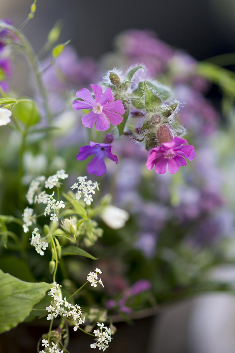 syrener vilde blomster
