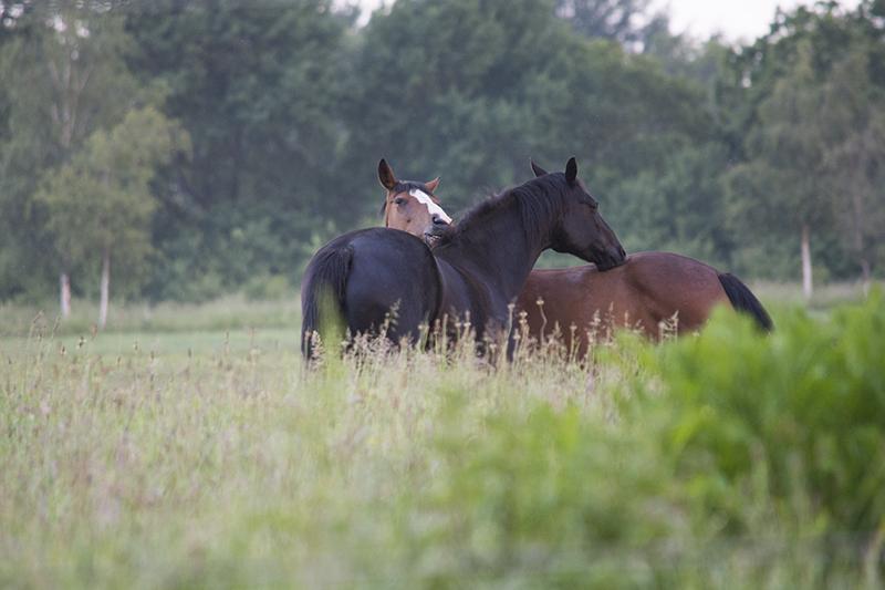 pinsemorgen heste