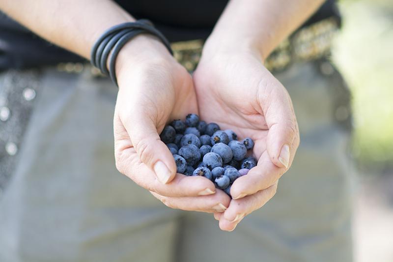 Friske blåbær - www.vangelyst.dk