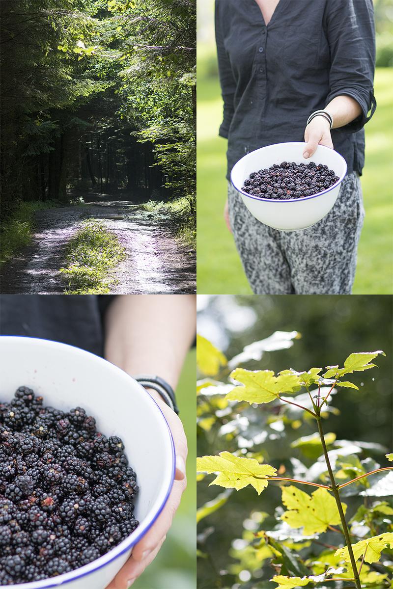opskrift vilde skov brombær - www.vangelyst.dk