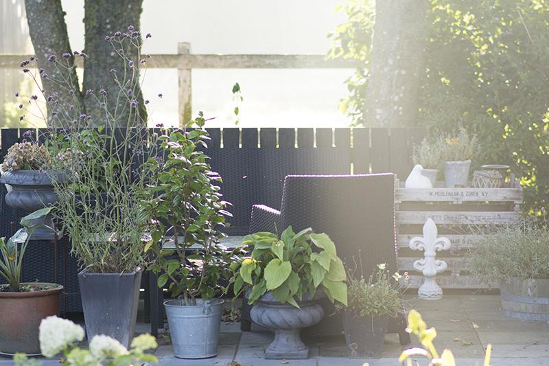 Krukker på terrassen - www.vangelyst.dk