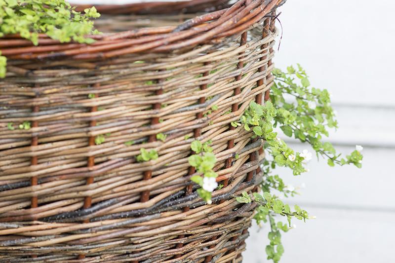 pileflet krukker med oliventræer