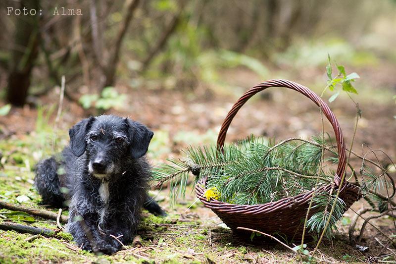 I skoven efter gran - www.vangelyst.dk