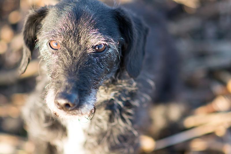Walther hunden - vangelyst