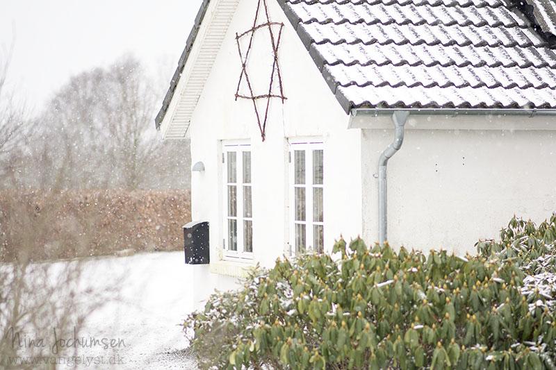 Stjerne i pileflet - www.vangelyst.dk