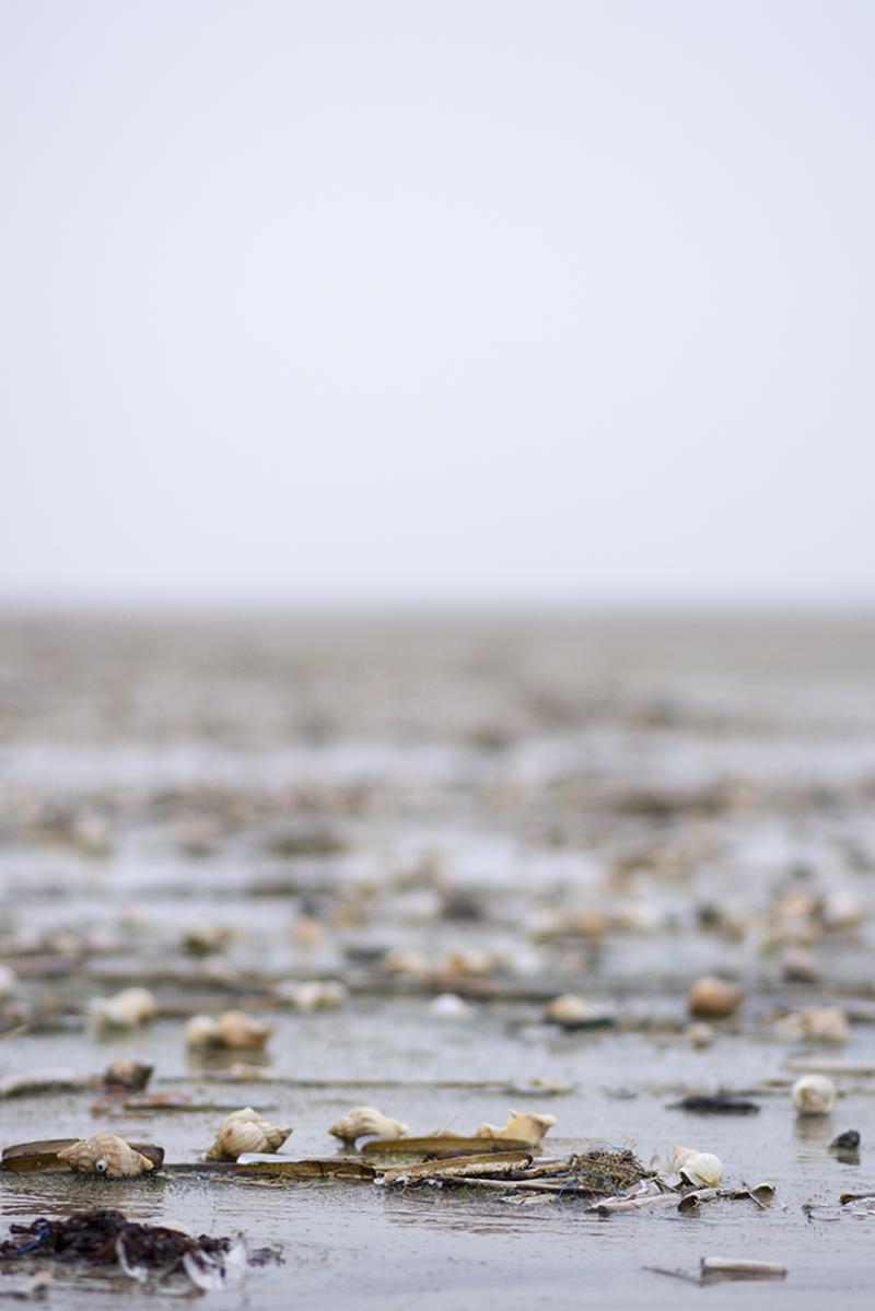 Fanø strand med konkylier - www.vangelyst.dk