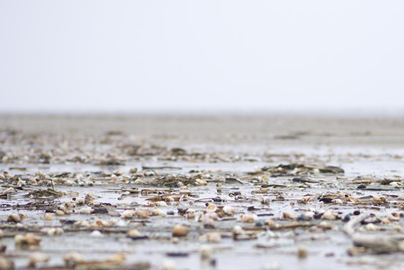Skaller og muslinger på stranden - www.vangelyst.dk