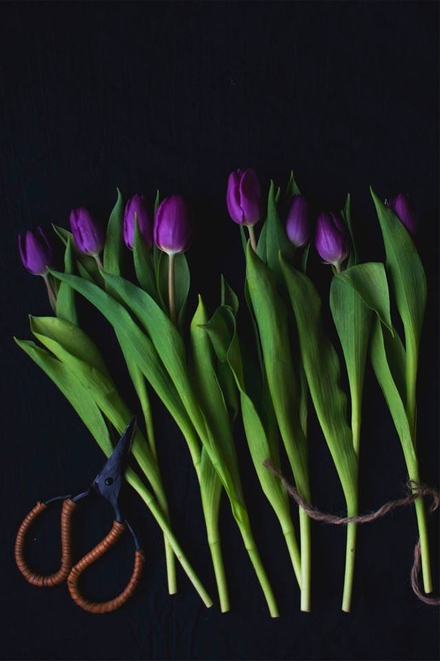 Tulipaner christina greve photography workshop - www.vangelyst.dk