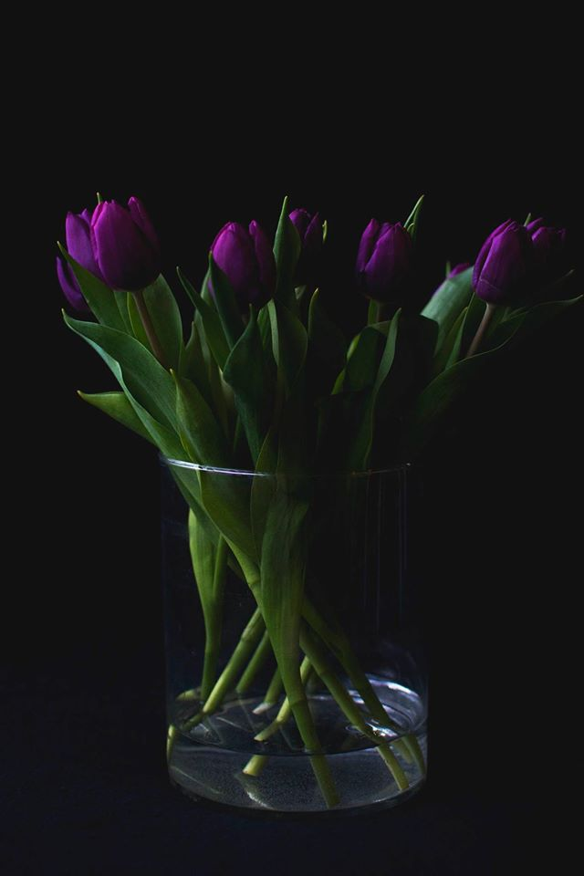 Tulipaner / tulips - www.vangelyst.dk