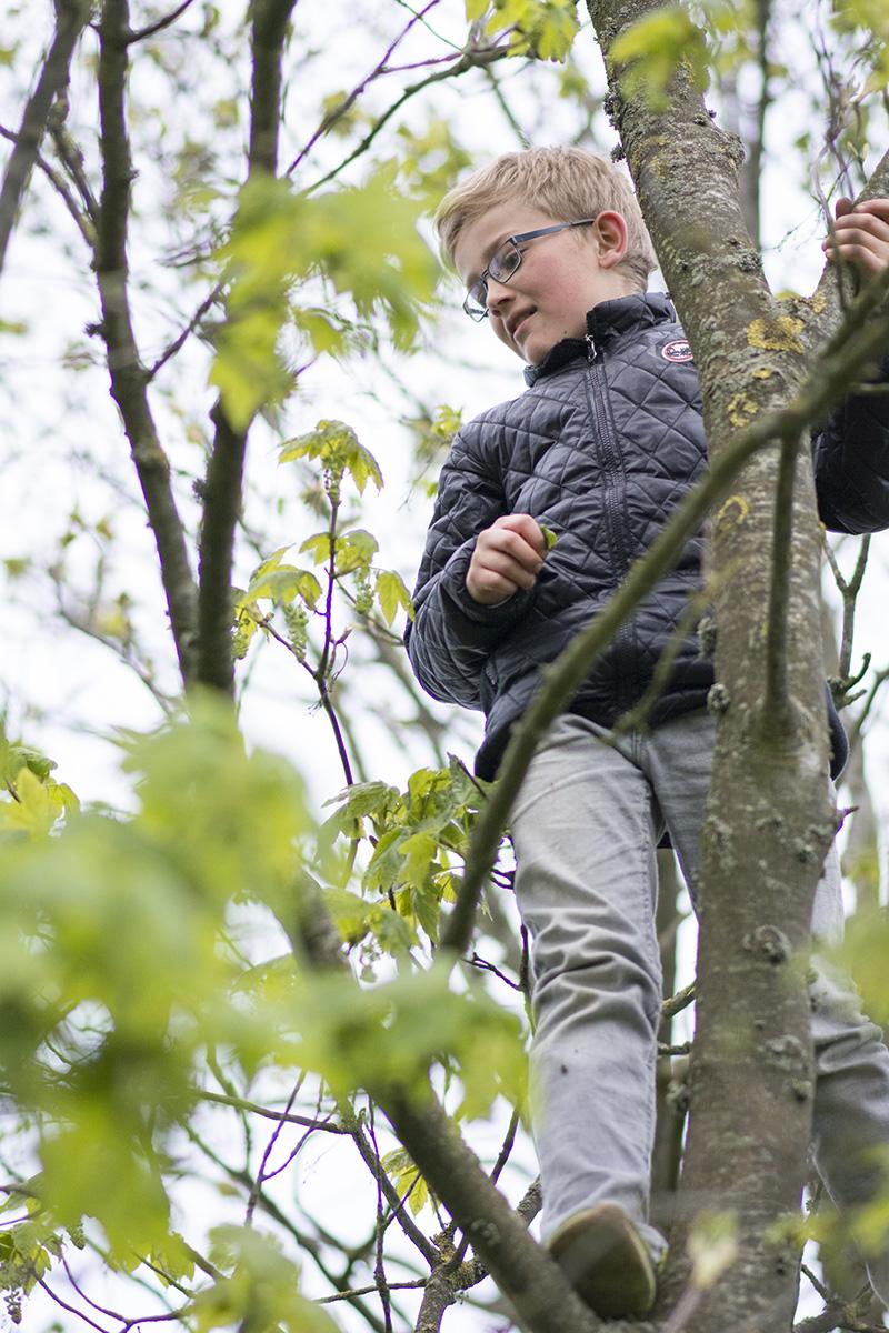 Karl klatrer i træer - www.vangelyst.dk