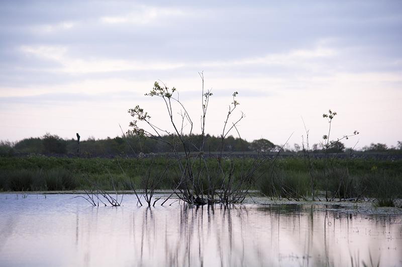 Pinsetur 2015 ved søen - www.vangelyst.dk