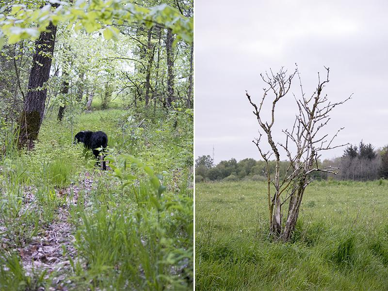 Pinsetur 2015 i skoven - www.vangelyst.dk