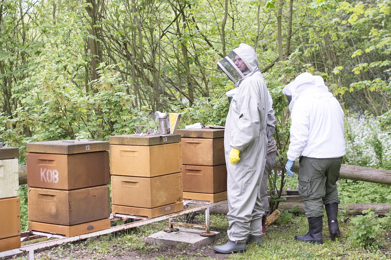 kolding og omegns biavlerforening - www.vangelyst.dk