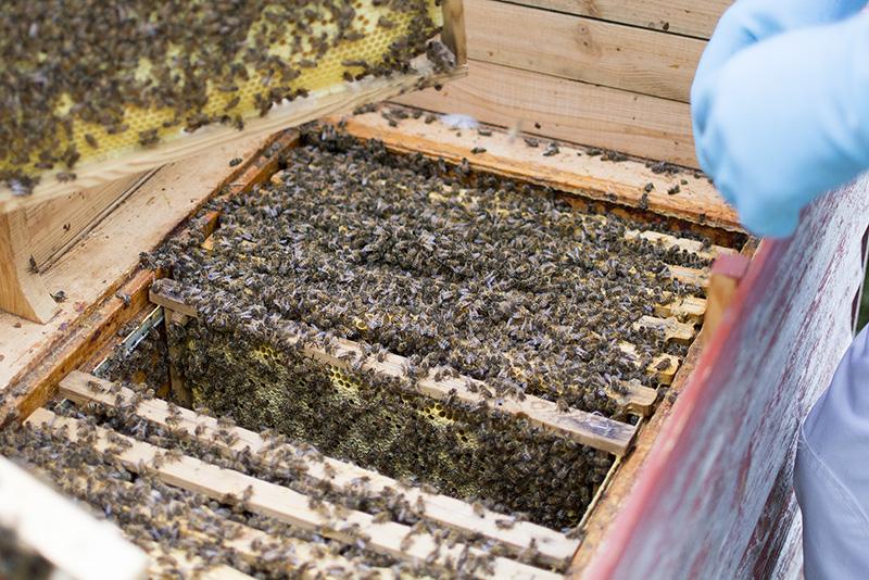 skolebigården kolding og omegns biavlerforening - www.vangelyst.dk
