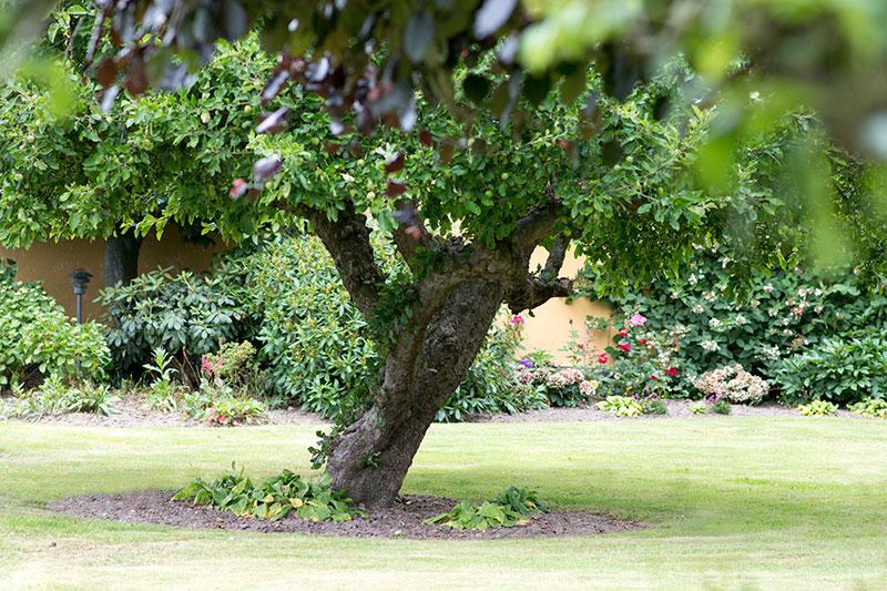 Have med gamle frugttræer - www.vangelyst.dk