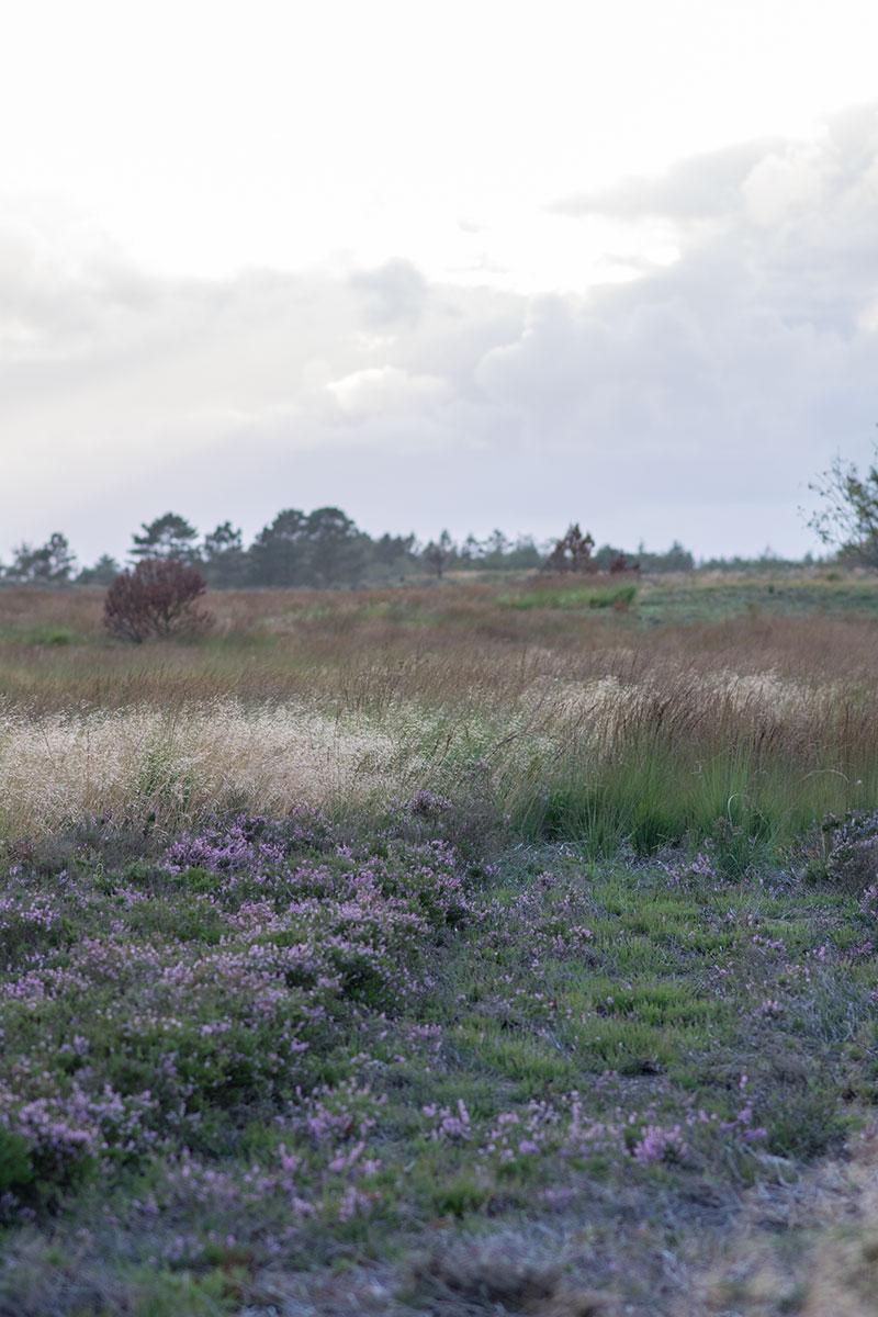 Naturen på Randbøl Hede