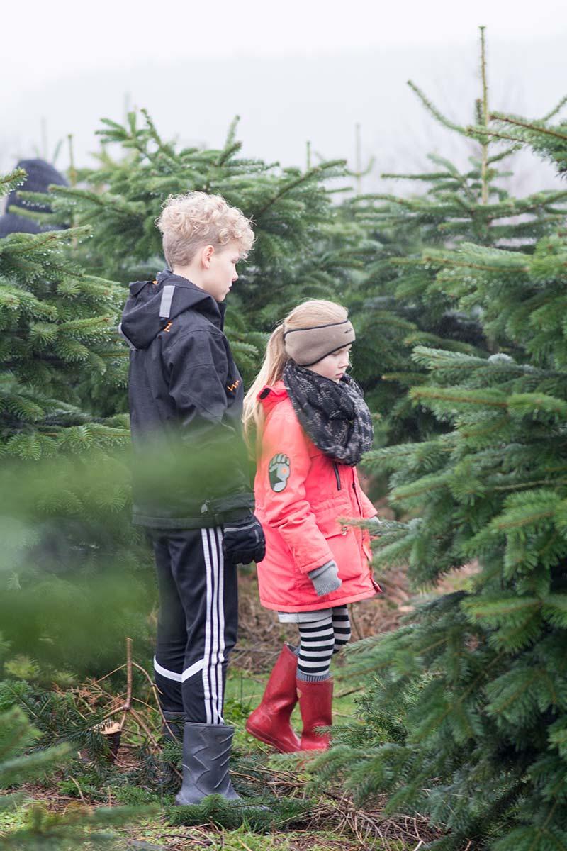 Alma og Max finder juletræ 2015 - www.vangelyst.dk
