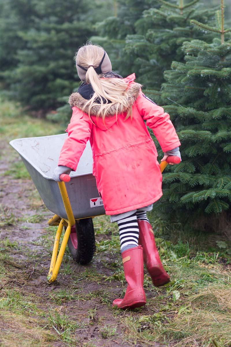 Alma på jagt efter juletræ - www.vangelyst.dk