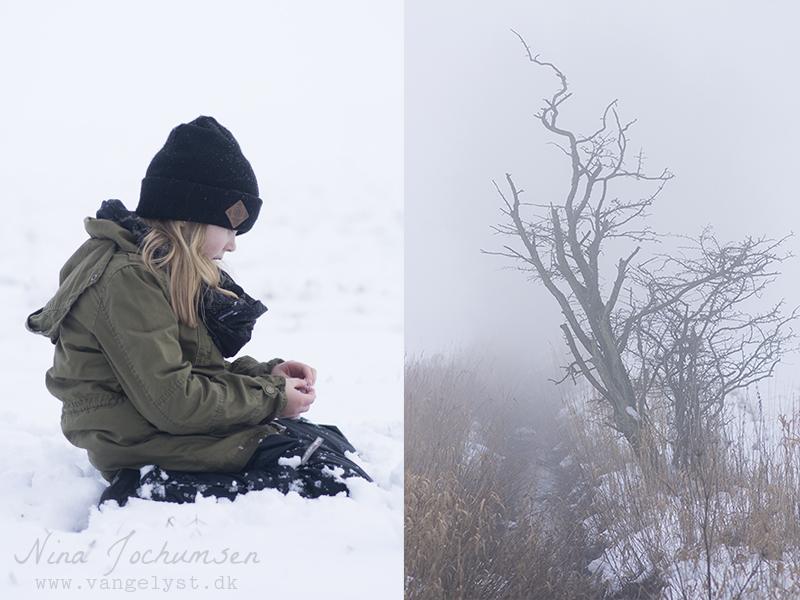 Alma i sne vinter 2016 - www.vangelyst.dk