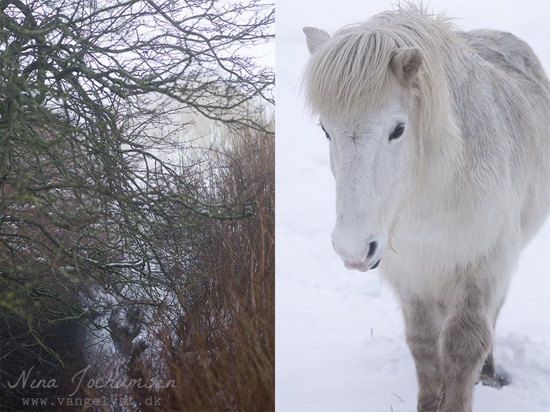 Klakki Islænder vinter 2016 - www.vangelyst.dk