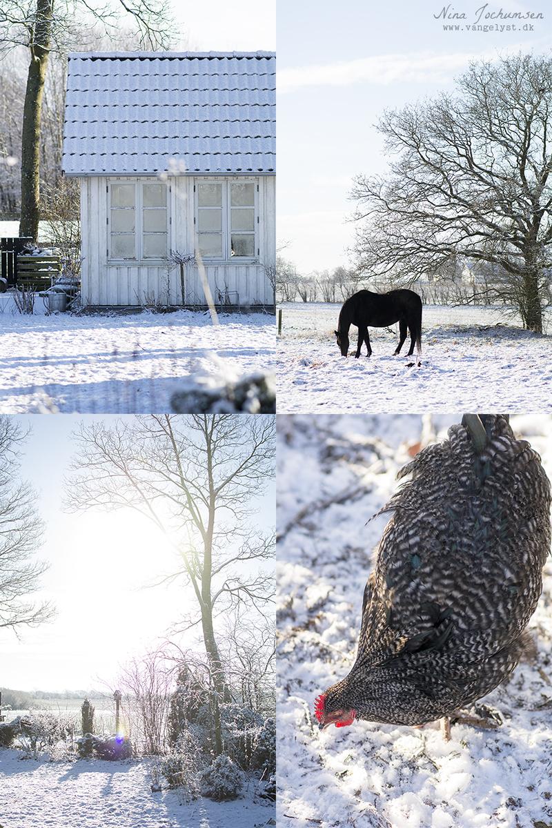 Vangelyst vinter og sne 2016