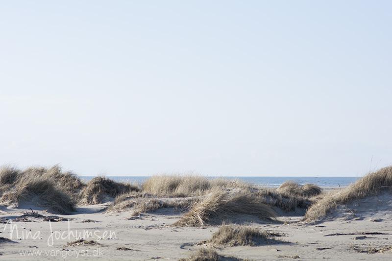 Klitter og strand på Fanø