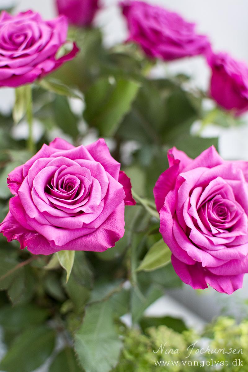 Flotte pink roser - www.vangelyst.dk