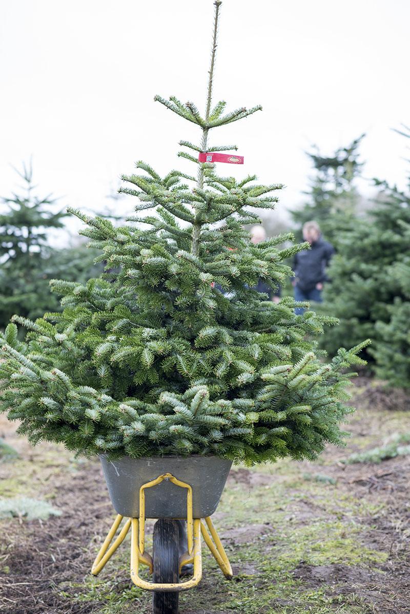 Årets juletræ 2016 - www.vangelyst.dk