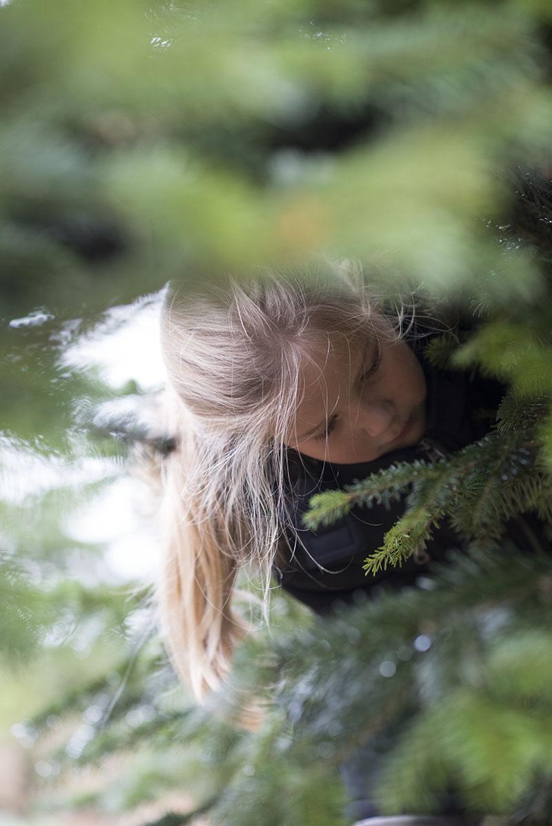 Alma fælder juletræ - www.vangelyst.dk