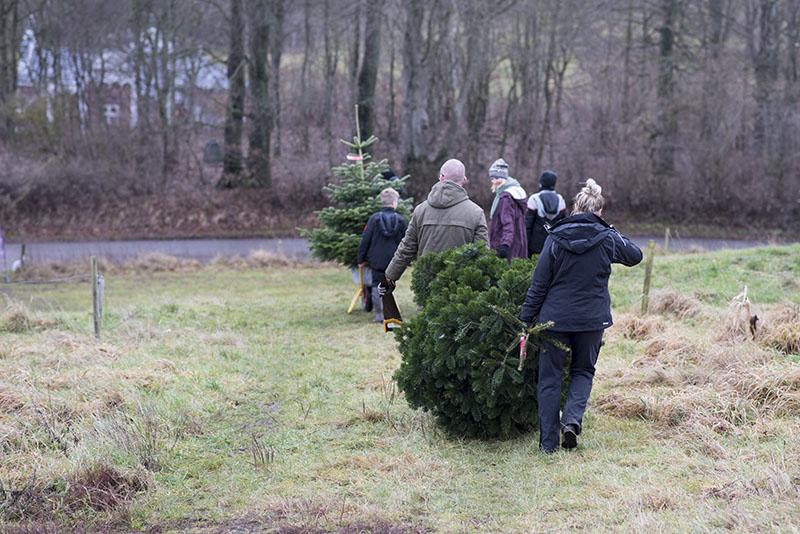 Tradition juletræ - www.vangelysyt.dk
