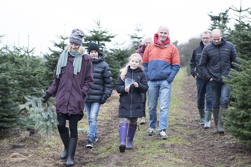 familien henter juletræ - www.vangelysyt.dk