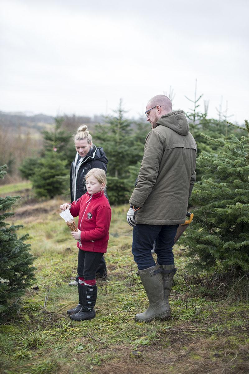 Fæld selv juletræ 2016 - www.vangelyst.dk