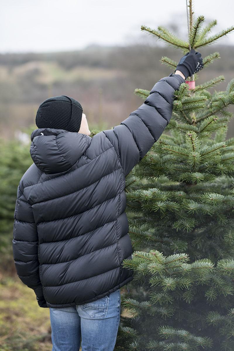Magnus vælger juletræ - www.vangelyst.dk