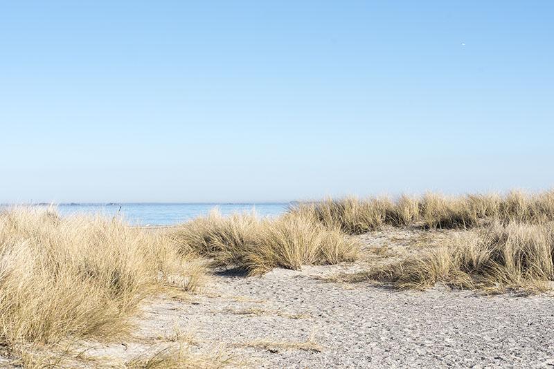 Amager Strandpark natur - www.vangelyst.dk