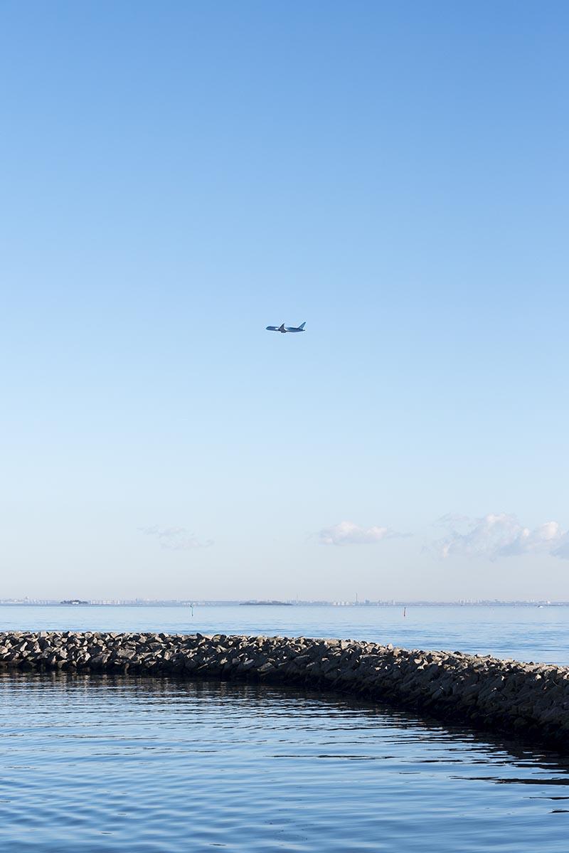 Amager strandpark fly - www.vangelyst.dk