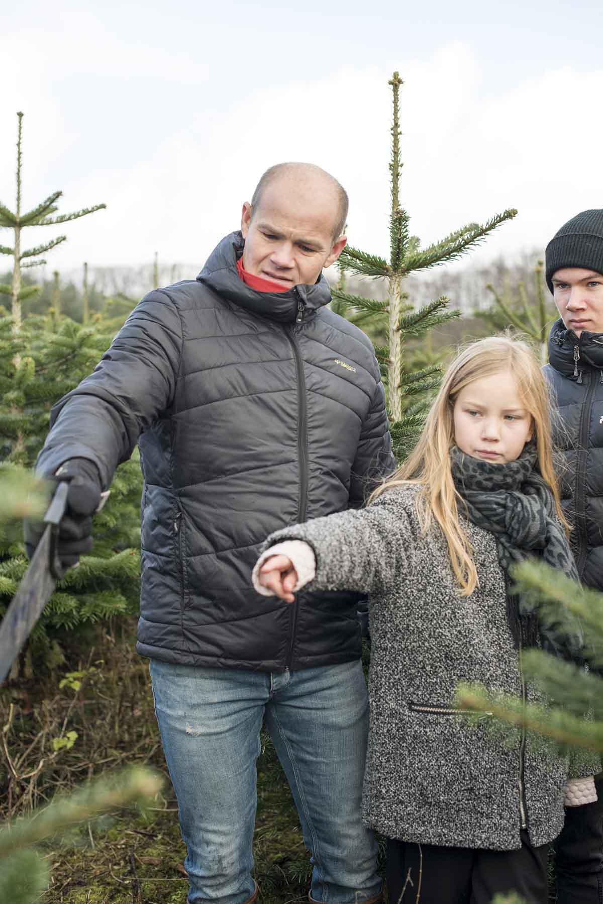 Fæld selv juletræer - www.vangelyst.dk
