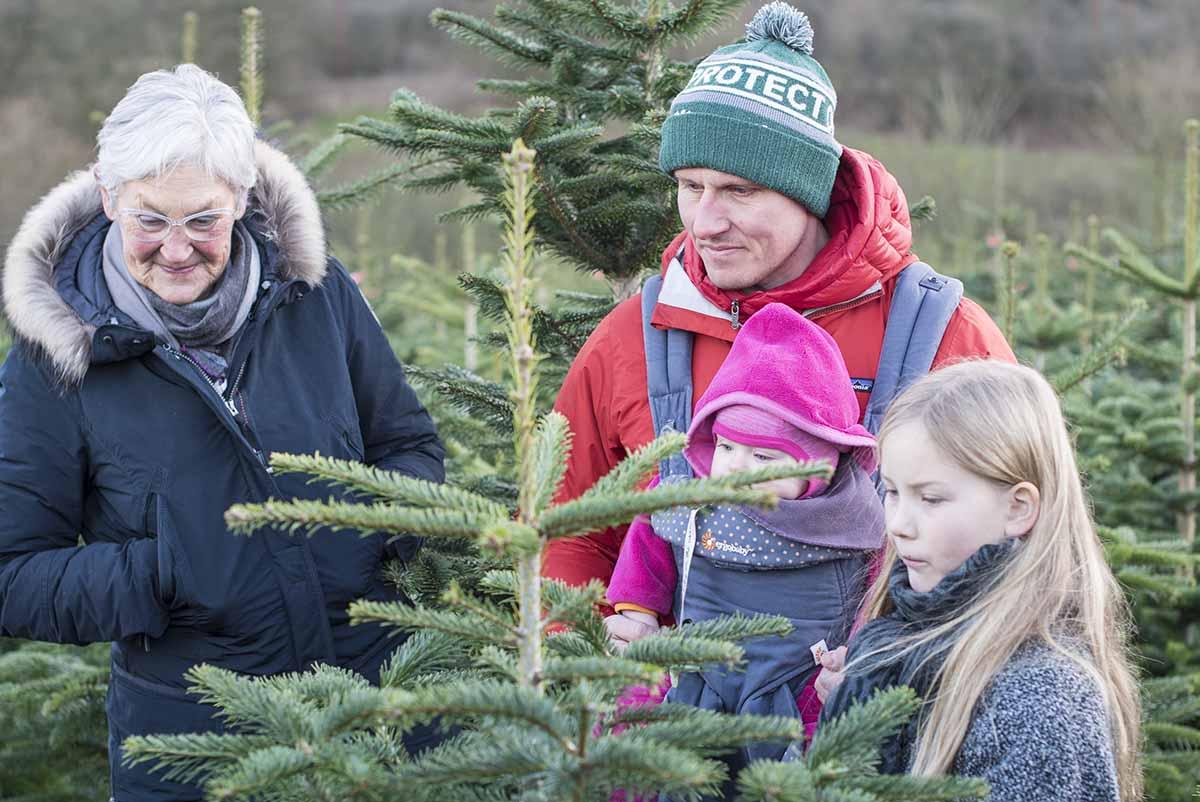 Fæld selv juletræ Lunderskov - www.vangelyst.dk