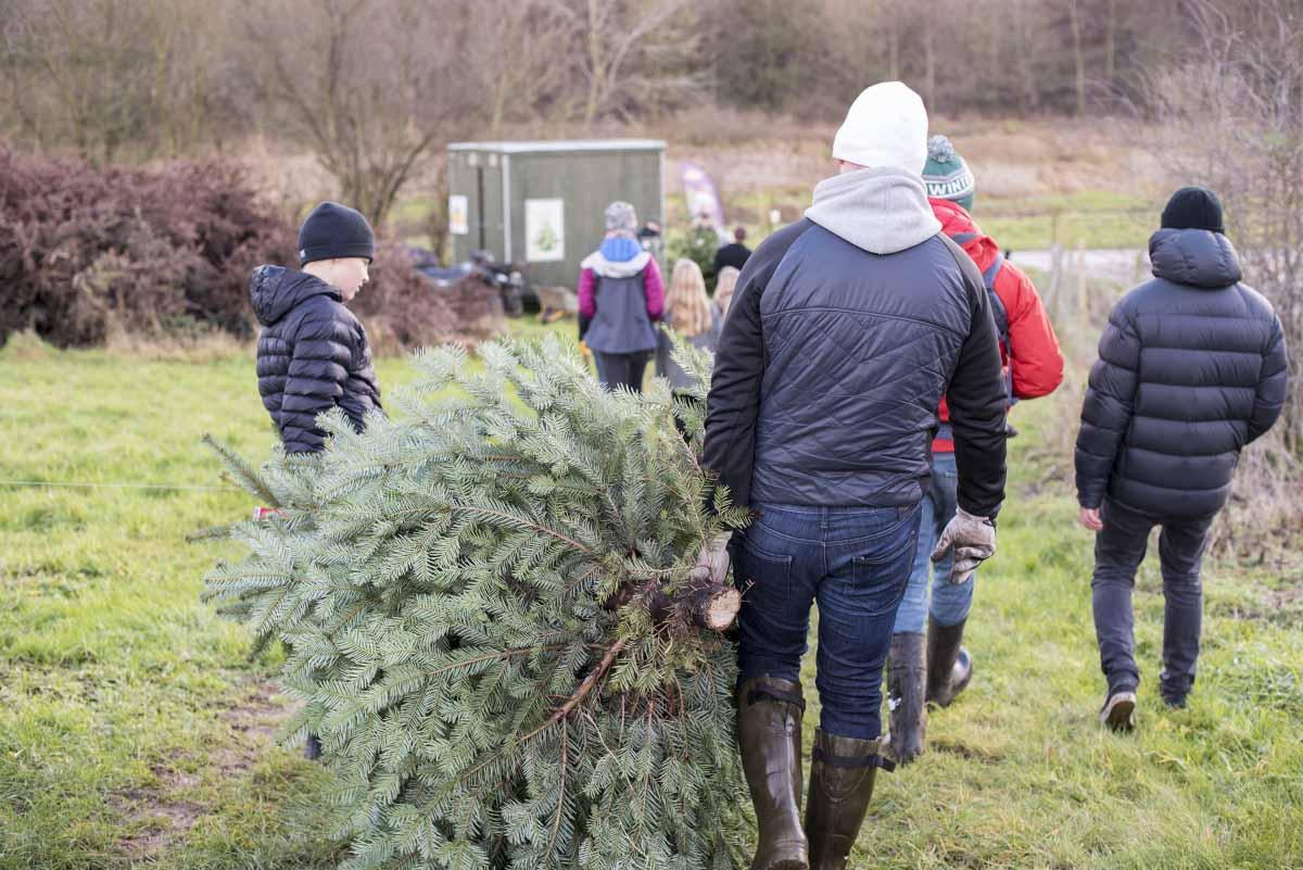 Juletradition grantræ - www.vangelyst.dk