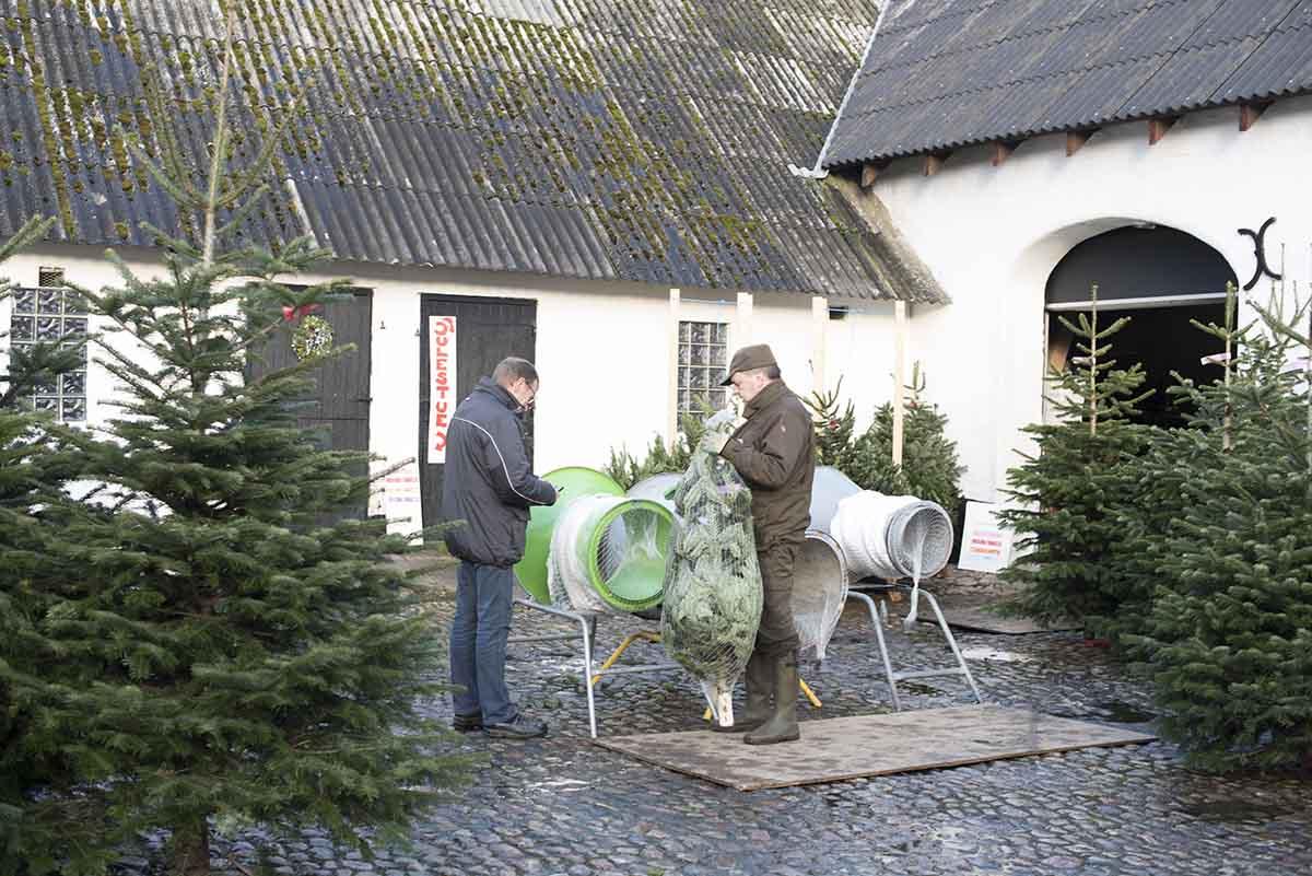 Juletræ Rolles Mølle - www.vangelyst.dk